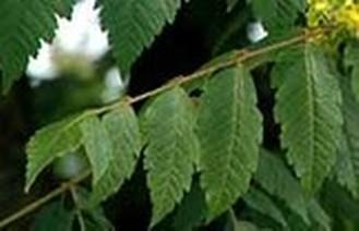 Betekenis bladeren